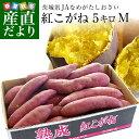 茨城県より産地直送 JAなめがたしおさい さつまいも「熟成紅こがね」 Mサイズ 約5キロ(18本前後) 送料無料 行方 薩…