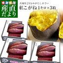 送料無料 茨城県より産地直送 JAなめがたしおさい さつまいも「熟成紅こがね」 SからSSサイズ 約1キロ(5本から10本…