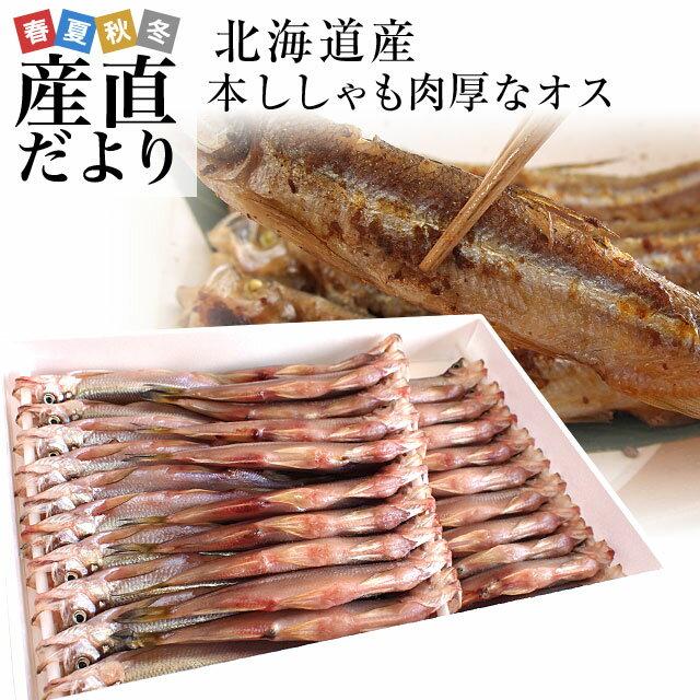 送料無料 北海道産 本ししゃも 肉厚なオス 30尾 約750g 柳葉魚 シシャモ