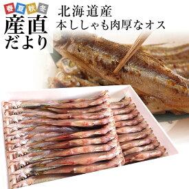 北海道産 本ししゃも 肉厚なオス 30尾入り化粧箱 送料無料 北柳葉魚 本シシャモ