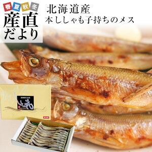北海道から産地直送 北海道産 本ししゃも 子持ちのメス 30尾入化粧箱 送料無料 柳葉魚 本シシャモ シーフード
