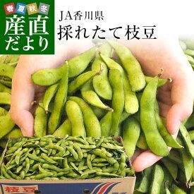 送料無料 香川県より産地直送 JA香川県 食感がよい大粒の枝豆 たっぷり2キロ 枝豆 えだまめ エダマメ ※クール便