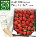 栃木県より産地直送 渡辺さんちのTちゃんいちご(栃乙女)大盛り1.2キロ(不揃い:28粒から42粒) 苺 いちご イチゴ スト…
