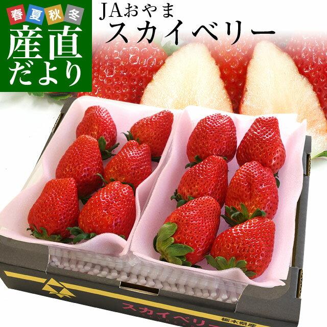 送料無料 栃木県より産地直送 JAおやま スカイベリー 約300g×2P(6から12粒×2P)いちご イチゴ 苺