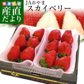 栃木県より産地直送 JAおやま スカイベリー 約300g×2P(6から12粒×2P) 送料無料 いちご イチゴ 苺 ※クール便発送
