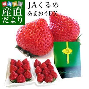 福岡県より産地直送 JAくるめ あまおういちご DX:ギフト用デラックス 約540g(270g×2パック) 送料無料 苺 いちご イチゴストロベリー
