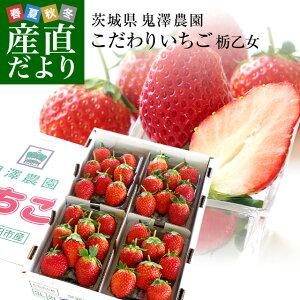 茨城県産 鬼澤農園のこだわりいちご (ステビア栽培 栃乙女) 合計1.2キロ以上 (300g×4パック入り) 市場発送 苺 イチゴ 大田市場