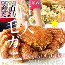 送料無料 北海道から直送 北海道・雄武産 浜ゆで巨大毛ガニ ジャンボ姿1尾 約1キロ かに カニ 蟹