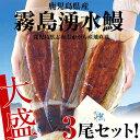 送料無料 鹿児島県より産地直送 霧島湧水うなぎ 長焼き3尾セット(140g以上×3尾) 鰻 ウナギ