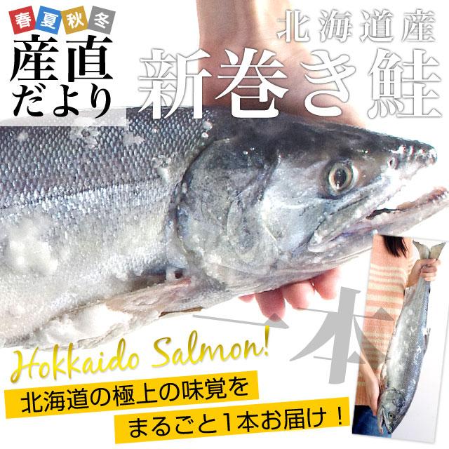 送料無料 北海道産 新巻き鮭 まるごと1本 約1.6キロ さけ サケ