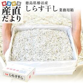 徳島県椿泊産 しらす干し 1キロ入り 送料無料 業務用箱 しらす シラス