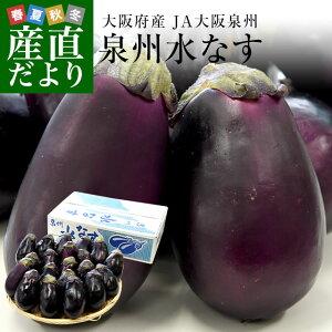 大阪府産 JA大阪泉州 泉州水なす A級品20玉 送料無料 なす 茄子 ナス 市場発送