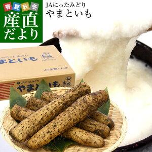 群馬県産 JAにったみどり やまといも 2キロ 送料無料 ヤマトイモ 大和芋 山芋 市場スポット