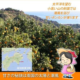 産地は高知県東洋町