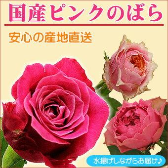 国産バラの花束ピンク系50cm×1本※20本以上無料トゲ取り処理★★バラ女性誕生日結婚記念日メッセージカード付きお祝い誕生日プレゼントバースデーローズプレゼント薔薇フラワー延命剤無料