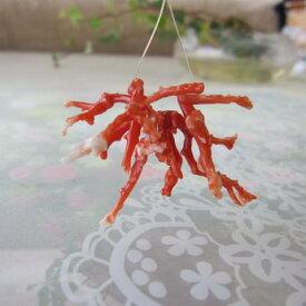 高知産赤珊瑚の枝ビーズ(10個セット)/貫通穴/サンゴ・さんご/『宝石サンゴ』