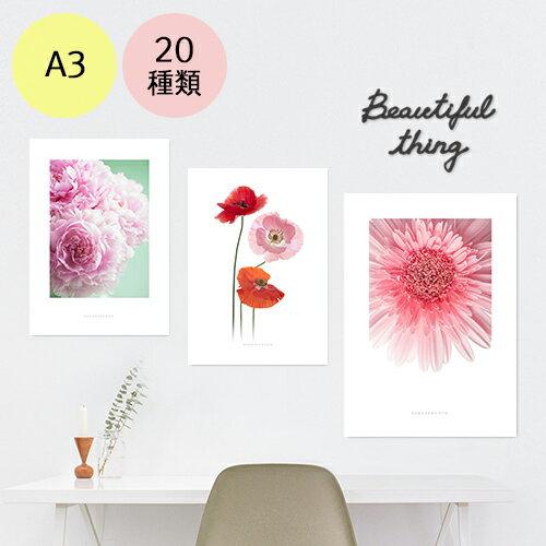 ポスター インテリア A3 お花 モダン 植物 おしゃれ アートポスター アートプリント フォトポスター サンサンフー フラワーコレクション A3 ※フレームなし
