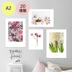 ポスター インテリア A2 お花 モダン 植物 おしゃれ アートポスター アートプリント フォトポスター サンサンフー フラワーコレクション A2 ※フレームなし