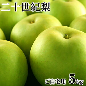 二十世紀梨(20世紀梨)5kg詰(16玉前後入/サイズ...
