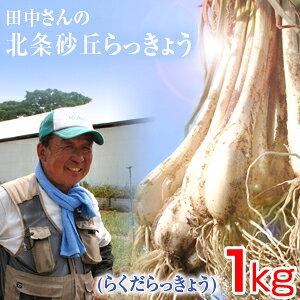 鳥取県産 特別栽培 田中さんの北条砂丘らっきょう1kg(根付き土付き らくだらっきょう 国産) 送料無料(北海道・沖縄を除く)