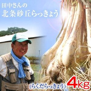 鳥取県産 特別栽培 田中さんの北条砂丘らっきょう4kg(根付き土付き らくだらっきょう 国産) 送料無料(北海道・沖縄を除く)