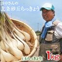 鳥取県産 特別栽培 田中さんの北条砂丘らっきょう1kg(根付き土付き 玉らっきょう) 送料無料