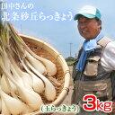 鳥取県産 特別栽培 田中さんの北条砂丘らっきょう3kg(根付き土付き 玉らっきょう) 送料無料