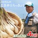 鳥取県産 特別栽培 田中さんの北条砂丘らっきょう4kg(根付き土付き 玉らっきょう) 送料無料(北海道・沖縄を除く)