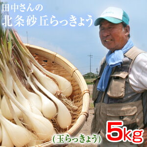 鳥取県産 特別栽培 田中さんの北条砂丘らっきょう5kg(根付き土付き 玉らっきょう) 送料無料(北海道・沖縄を除く)
