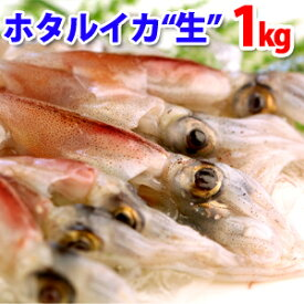ホタルイカ(生冷凍ほたるいか)約1kg(約250g×4パック) 山陰沖産 送料無料(北海道・沖縄を除く)