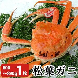 松葉がに800〜890g(大サイズ)×1枚 日本海産 未冷凍 お歳暮ギフト 送料無料(北海道・沖縄を除く)