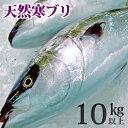 天然ブリ(寒鰤/寒ブリ)10kg以上(出荷時「三枚おろし」限定) 送料無料(北海道・沖縄を除く)
