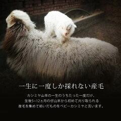 カシミヤ山羊の一生に一度しか採れないベビーカシミヤ