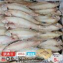 土曜日限定!訳アリ大特価【送料無料】チビ一夜干しかれい ヒレグロ 55g以下 5kg入(約100〜120尾) 北海道産 干物 …