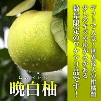 晩白柚(ばんぺいゆ)L玉(1.7kg以上)訳ありのため特価!【ザボン】【ギフト】【FoCou1214】