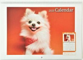 カレンダー 2020年 可愛い 犬 の カレンダー 壁掛けカレンダー 送料無料