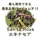 有機オーガニック素材の無農薬・無化学肥料 「エキナセア」 10g♪♪【エキナセア パーピュリア/エキナセア パープレ…