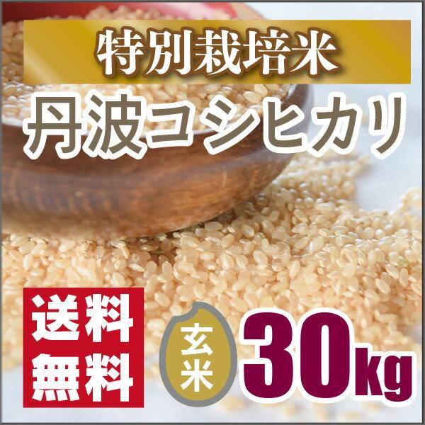 【特別栽培米】京都丹波コシヒカリ玄米30kg(30年産)お値打ち価格です