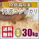 【特別栽培米】新米 京都丹波コシヒカリ玄米30kg(28年産)お値打ち価格です