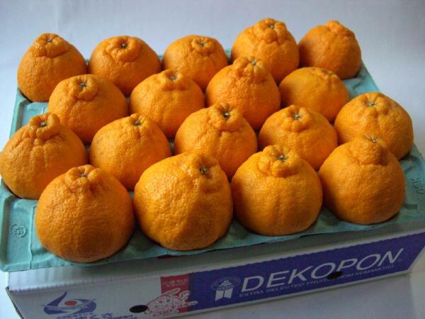 熊本産 温室栽培 デコポン5kg(15〜20玉入)ハウスでこぽん【御歳暮】【御年賀】