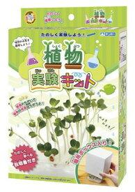 ☆たのしく実験しよう 植物の成長を観察しよう☆ 植物実験キット【植物 野菜 育てる 工作 図工 自由研究 】【銀鳥産業】