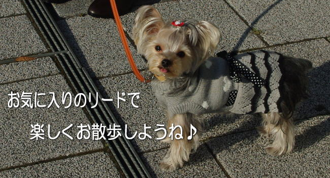 【Saint Mode】リード キラキラビジュー付きのカラフル牛革リードで楽しくお散歩♪小型犬用牛革リード 【autumn_D1810】