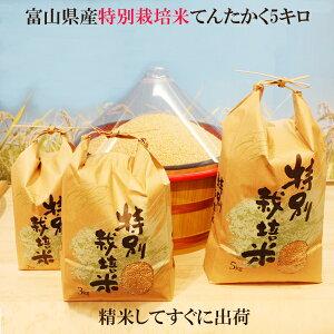 新米●令和2年度産 富山県産 特別栽培米てんたかく 玄米5kg】【送料無料】玄米・1分搗き・3分搗き・5分搗き・7分搗き・白米・上白米●玄米を白米に精米すると、重量が約1割減少します。