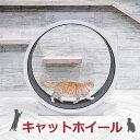 キャットホイール キャットウォーク キャットタワー cat wheel 猫 回転車 猫 回し車 猫ホイール 猫用ルームランナー …