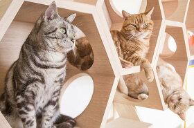 [MYZOO(マイズー)/六角ハウスビジーキャット]猫用猫ネコベッドペットベッド壁付けウォールベッドキャットタワー木製おしゃれインテリア