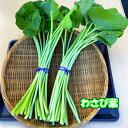 静岡 有東木 わさび名産地 わさび茎・葉 辛みがあり、ビタミンCが豊富です。ピリッと辛い醬油漬け・さっぱ…