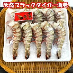 送料無料(本州のみ)特大天然ブラックタイガーえび10尾 天然エビのぷりぷり感をご堪能ください。