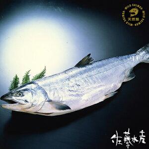 日高産定置時鮭(生冷凍)約2.3kg(丸)