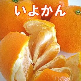 いよかん 4kg 【家庭用】 (良品) 【送料無料】愛媛の代表的柑橘 宮内いよかんは見た目,香り,味の三拍子揃ったいよかんの王様!弾ける香りと果汁/いよかん/伊予柑/愛媛いよかん/いよかん/いよかん/いよかん/いよかん 訳あり【smtb-TD】【saitama】
