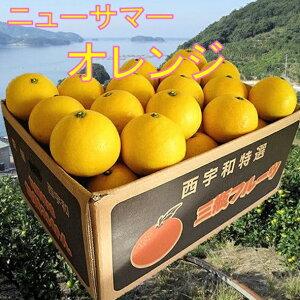 【日向夏】 ニューサマーオレンジ 4.5kg×2箱【訳あり/家庭用】農家直送【送料無料】初夏のオレンジ、日向夏/気品のある甘い味わいと爽やかな香りのニューサマーオレンジ 訳あり/